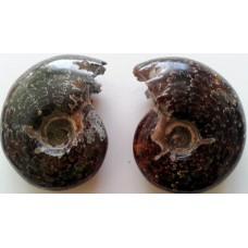 Амонит с ринхолити - екстра качество