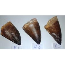 Зъб от Мезозавър